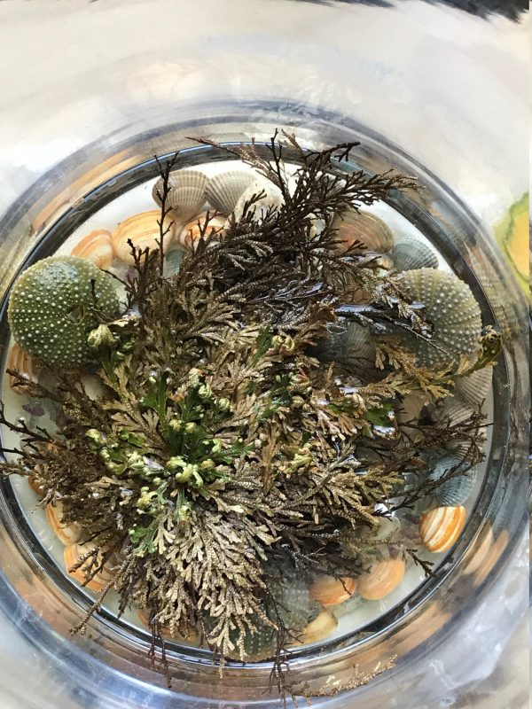 Rose of Jericho, Resurrection Plant, Dinosaur Fern Miracle, abundance plant, prosperity, negativity cleanse, protection, house blessing